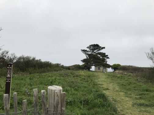"""A path is beaten through the tall grass to a tiny hut, apparently perched on the edge of a cliff.  A picturesque tree, limbs permanently bent from the sea breezes, forms a kind of archway in front of the hut.  In the foreground to the left is a post labelled """"TI FELIX"""", with informational icons and the name of the local community:  """"Commune de GOULIEN""""."""