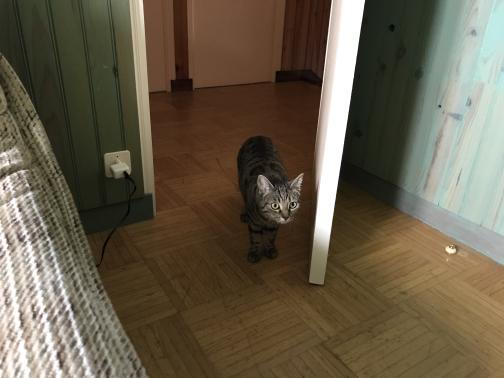 A petite cat peers into the room from an open doorway.  The floor is parquayed.