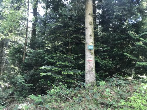 A tall tree trunk, long-ago shorn of its lower limbs, stands to the south-southeast in front of some smaller evergreens.  Painted on the trunk are the markings for a GR trail, with the numbers 36 and 22 painted below in white with red outline.  Tacked above the paint is a placard with the number 410, and another above that with less-clear markings.