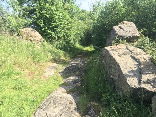 In the ground is a long, low, rounded rock, or perhaps several of them, forming something like a trail running to the southeast.  Grass and weeds surround it; two large rocks stand above it to the right, and it disappears into a thicket of trees several dozen yards ahead.