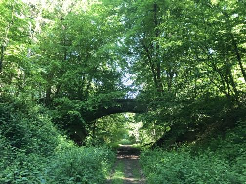 A one-lane dirt road runs north through a 15–20′ deep gulch, the sides covered by brush.  Ahead, a stone bridge arches across the gulch; the tops of the gulch are lined with trees, whose branches and leaves reach overhead such that the sky is barely visible.