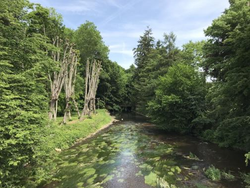 A river runs below to the northeast, green growth underwater showing the current.  Trees grow close on the banks except for one stretch on the west, where they are just tall, bare trunks.  In the distance, the river narrows and the trees grow closer together; under them, there might be a wooden bridge.  The sky above is thinly clouded.