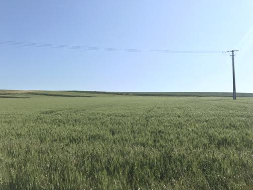 A green field stretches to the northeast horizon, soft with tall grass or not-yet-seeding wheat.  A single utility pole stands at the right side of the photo, with lines running across to the left; the sky is blue.