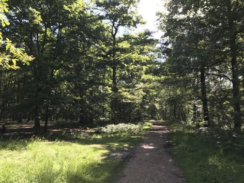 A packed dirt trail heads east through an open forest.  The near length of the trail is edged with grass and weeds; some trees are dark and shaded, while others are brightly lit.