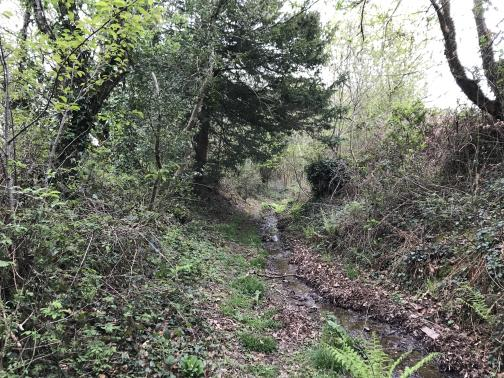 A muddy trail, heading roughly east, lies nestled between two brambly slopes, with a looming tree ahead.  The middle of the trail has a winding rivulet, but there is solid ground on either side of it.