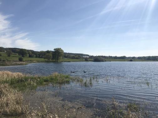 One end of a large lake stretches away to the east.  Rushes grow in the near shallows, and a pair of geese are swimming nearby.  The far shore, around to the left and across the lake, is green (perhaps grass) down to the water's edge, with occasional trees and buildings.