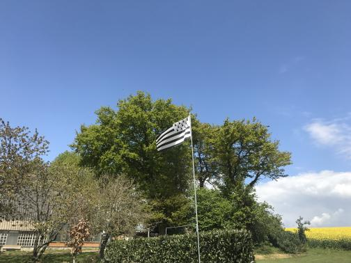 """In front of a hedge, a flag flies from the top of a pole, in the rough pattern of the American flag.  Nine stripes alternate black and white, and the white field in the corner has eleven identical small shapes, resembling a black triangle with three dots at the top point (""""sable, four bars argent, a canton ermine&rdquo).  Behind the hedge to the northeast are a house and some trees; the sky above is blue, with a few clouds in the distance."""