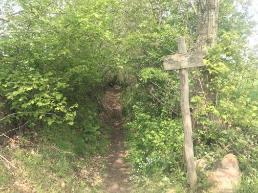 "A narrow trail runs north through a low tunnel formed by brush growing up and over from either side.  The end of the trail isn't visible.  To the right of the entrance, a rough wooden sign reads ""Voie romaine"", the letters carved into the wood."