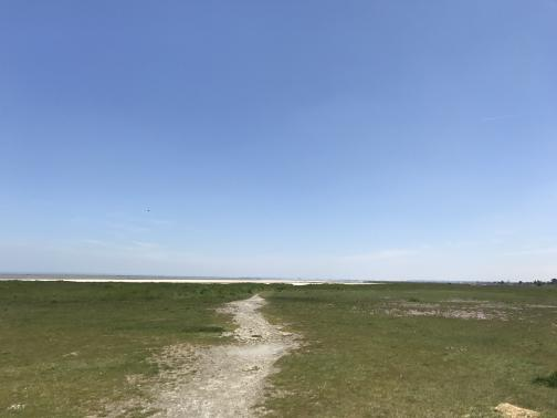 A beaten-dirt trail winds east through ground cover towards tall grasses and then a distant beach.  The total change in elevation visible in this photo is something like one foot up or down.  The sky is clear blue, with haze visible at the horizon.