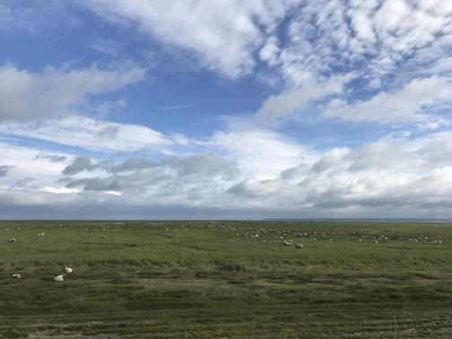 A broad, flat, grassy field extends nearly as far as the eye can see; scattered around it are scores of white sheep.  Some standing water is visible in the distance; beyond that to the north is the suggestion of a larger body of water, and beyond that is featureless land.  The sky has scattered clouds.