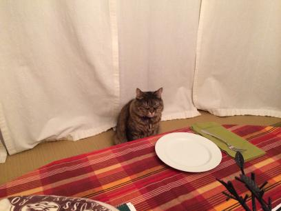A medium-hair tortoiseshell cat, Gracie, sits upright on a window seat cushion at a table.  A place is set before her, a white plate and a green napkin with a fork, all on a red plaid tablecloth.  White curtains are closed behind her.  Her eyes are squeezed shut.